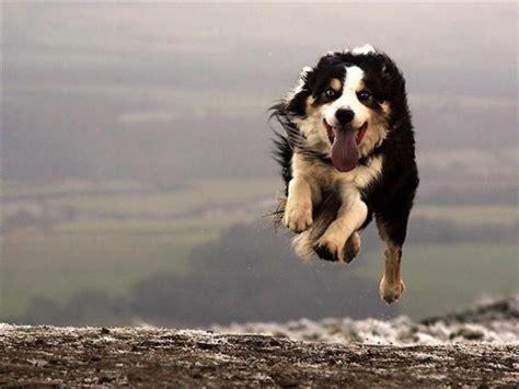 imagenes y frases espectaculares fotos de animales espectaculares
