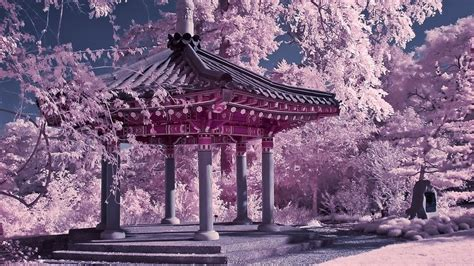 Japan Traditional Home Design by Simplywallpapers Com Chinese Japan Korean Cherry Blossoms
