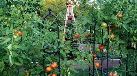 A Late Summer Vegetable Garden Private Newport Summer Garden Vegetables