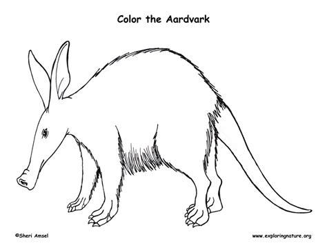 Aardvark Coloring Page aardvark coloring page