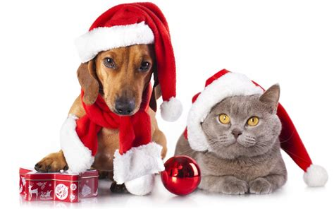 christmas pets waiting for santa gifts wallpaper
