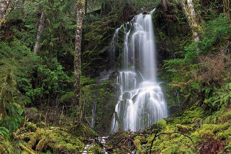 imagenes de otoño lluvioso isabel d 237 ez bosque templado lluvioso