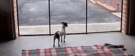 Door For Dog Removable Pet Fence For The Pool Amp More Protect A Child