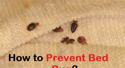 how to prevent bed bug bites while sleeping how to prevent bed bug