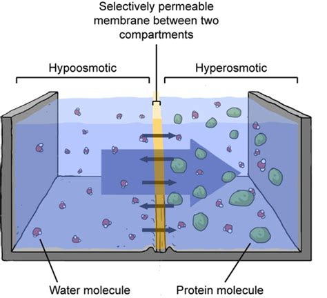 hyperosmotic chemistry  cool pinterest chemistry