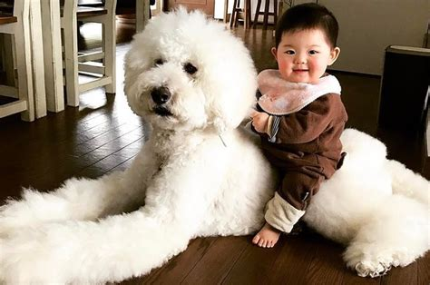 babies and dogs dogs and babies www pixshark images galleries with a bite