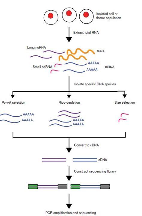 rnaseq workflow 44 best workflow images on gene expression