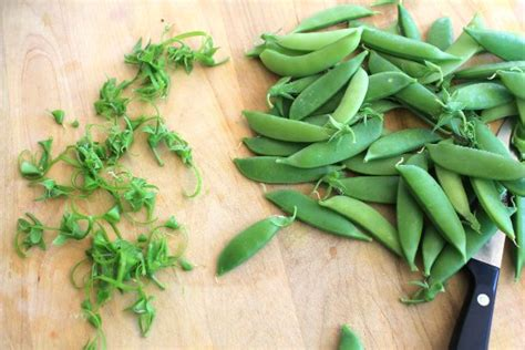 can dogs eat sugar snap peas dig for your dinner growing peas and sweet pea flowers from seed