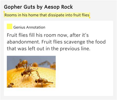 fruit flies in my room rooms in his home that dissipate into fruit flies gopher guts lyrics meaning