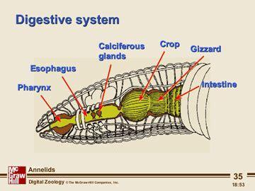 earthworm pharynx diagram untitled page www ncsu edu