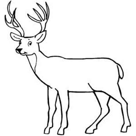 coloring pages of deer bucks buck coloring pages clipart best