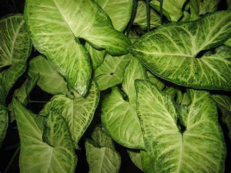 large low light houseplants the tattooed gardener top 10 houseplants for low light