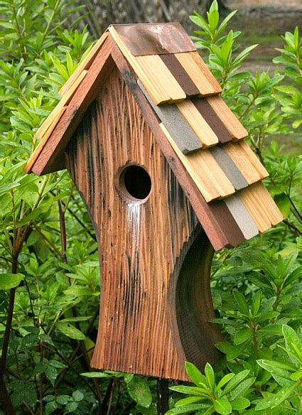 cool bird house plans photo cardinal bird house plans images home garden plans bird houses photos of