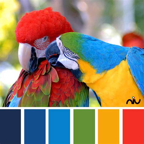 parrot green color palette parrots color palette life in color pinterest