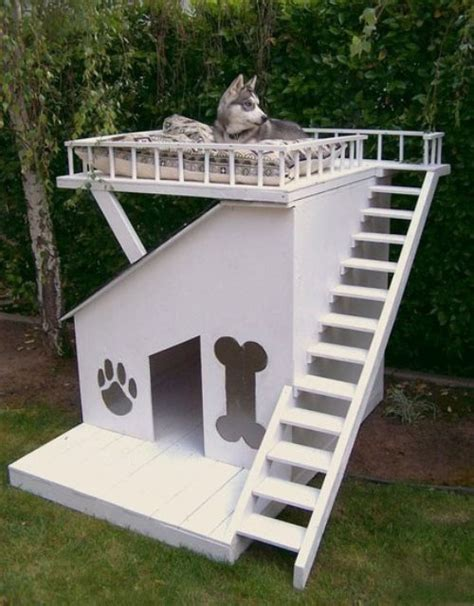Nice Dog House Rugged Life