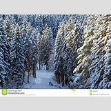 Taiga Landscape Winter | 1300 x 957 jpeg 392kB