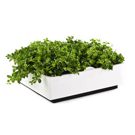 white wall planter shop white wall planter on wanelo