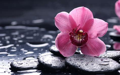 wallpaper rain pink wallpaper pink flower under the rain my hd wallpapers