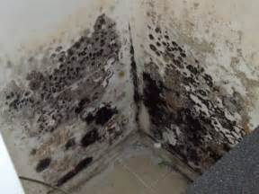 how to clean black mold in basement how to remove black mold from your basement
