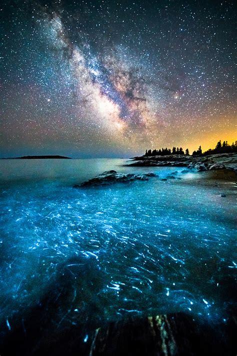 bioluminescence  coast  maine photography  benjamin