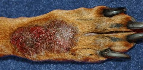 spot on paw spots on dogs grooming eastern suburbs sydney