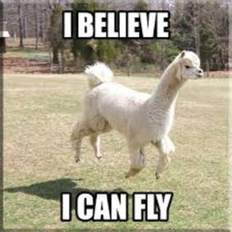Llama Meme - funny alpacas funny llama and alpaca memes2 funny llama