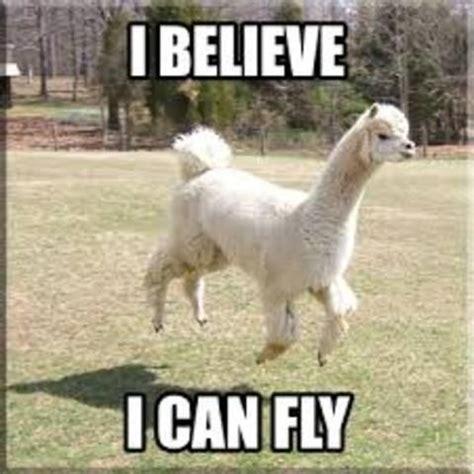 funny alpacas funny llama and alpaca memes2 funny llama