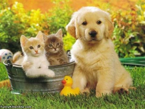 puppy with kittens   funnykittensite