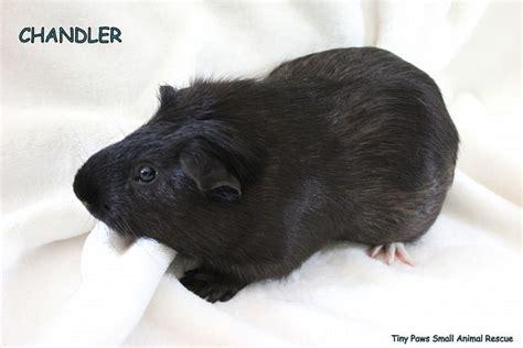 tiny paws small rescue held adopt chandler windsoritedotca news ontario s neighbourhood newspaper