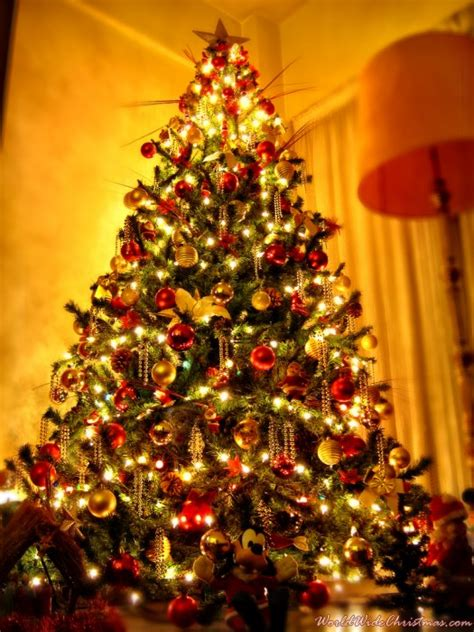 sebastian s christmas tree from buenos aires argentina