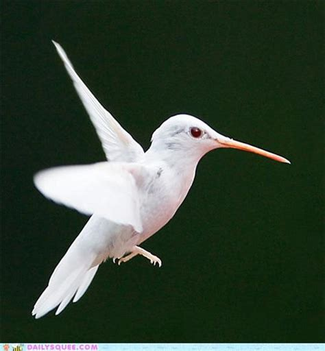 1000 images about beautiful rare albino animals on