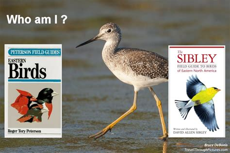 best bird field guides travel through pictures com