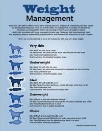 weight management articles pet infographics