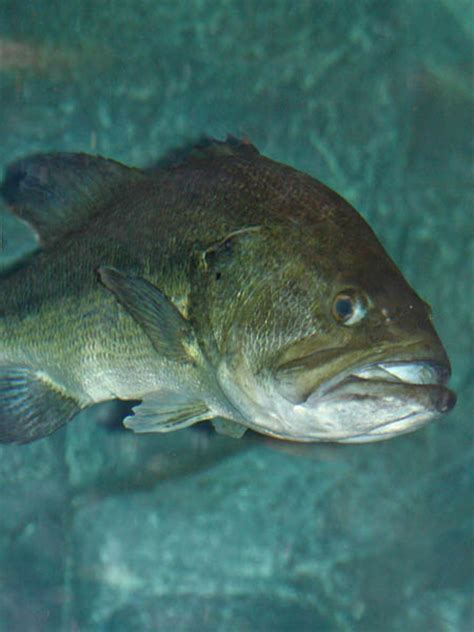stock  lake    biting bass crappie