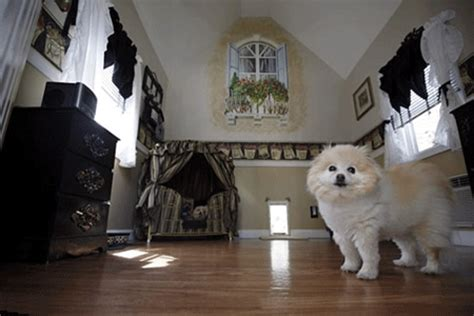 dog house interior impressive dog house designs and decorating ideas