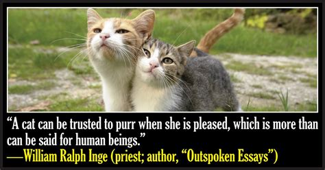 cat haiku sweet verses books 50 quotes about cats cattime