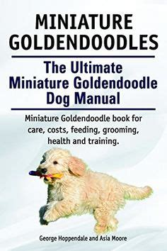goldendoodle puppy feeding 1000 images about oodles of doodles on