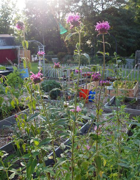 Plan A Vegetable Garden Garden Technology How To Plan Your Vegetable Garden A