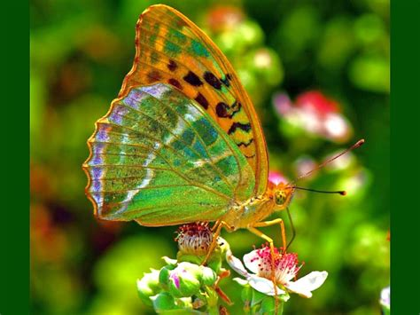 colorful butterflies beautiful colorful butterflies www imgkid the