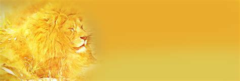 Banner Safari Hewan 36 gambar singa foto singa paling keren mewarnai gambar cheetah mewarnai gambar gambar hitam dan