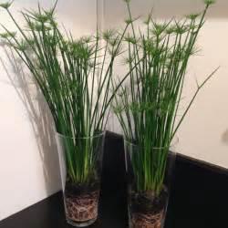 Plante Verte Exterieur En Pot
