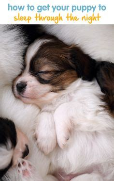 how to get a puppy to sleep through the 1000 images about blogs for dogs and cats on pet insurance pet