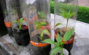 Invernaderos pequeños   elblogverde.com