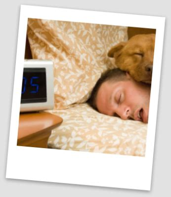 motels that allow dogs find pet friendly motels in all u s cities at pet hotels of america