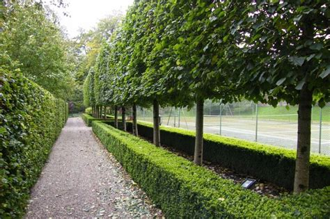 hstead garden design mylandscapes garden designers special trees for landscape design garden design