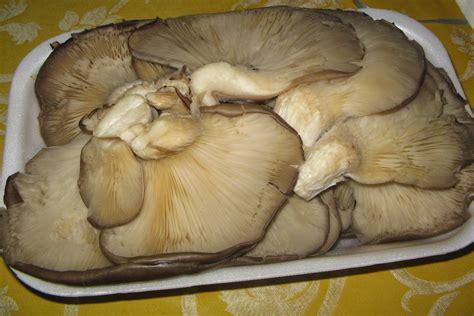 non cucine isolane funghi pleurotus al forno