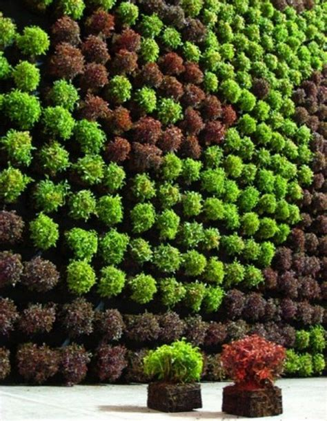 Excellent Idea Vertical Garden Design Ideas Wall Garden Plants For Garden Walls