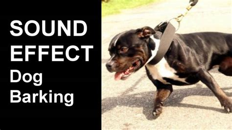 vicious dog barking sound effect youtube