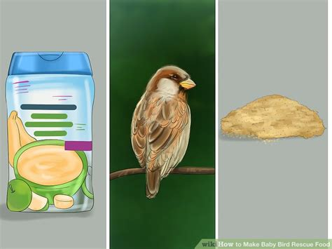 veterinarian approved advice on how to make baby bird