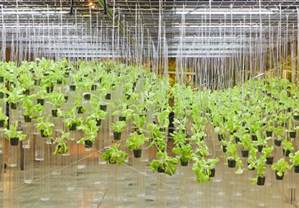 A Beginner's Guide to Hydroponics
